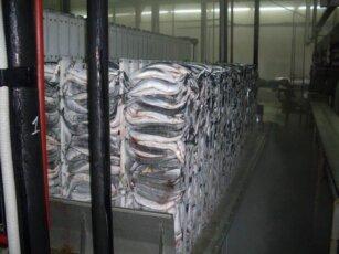 Оборудование для хранения рыбы в торговле